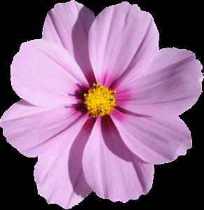 blossom-1389625_960_720